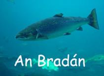 an-bradan