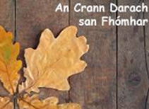 an-crann-darach